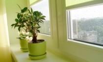 Rosenie plastových okien