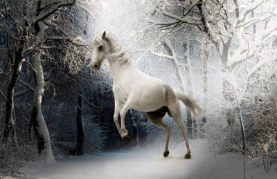 biely kôň