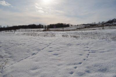 sneh a záhrada