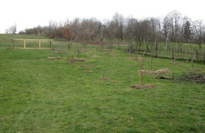 staré stromy v novej záhrade