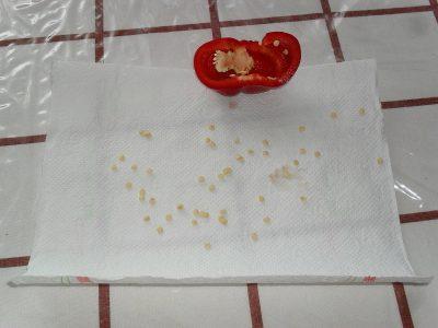 Vyklíčia len semená zo zrelej papriky
