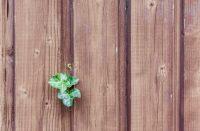 Zrubový profil prinesie kúsok hôr do vášho bývania