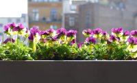 Zelené balkóny pomôžu mestám